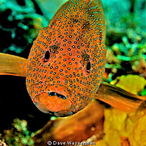 This fish would not move and was quite happy having me ta... by Dave Wasserman 